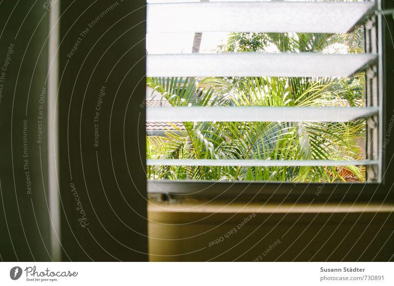 Aloha tree house Pflanze Sommer Schönes Wetter Blatt exotisch schwanger Palme Palmenwedel Fenster Lamellenjalousie Hawaii Honolulu tropisch Aussicht