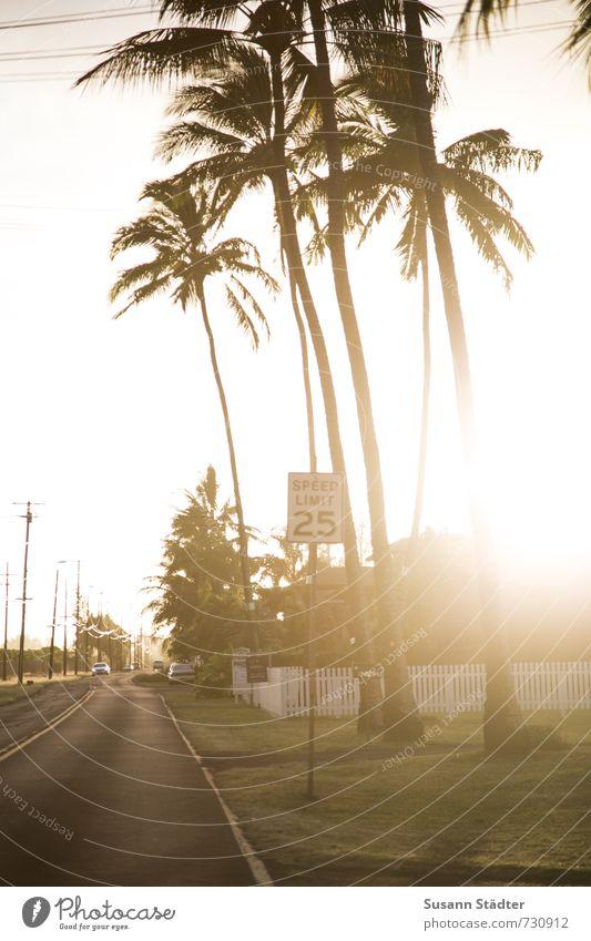 Gegenlichtpalme Natur Wolkenloser Himmel Schönes Wetter Baum Grünpflanze exotisch Oase Verkehrswege hell Verkehrsschild Meile 25 Palme Hawaii Oahu Autobahn