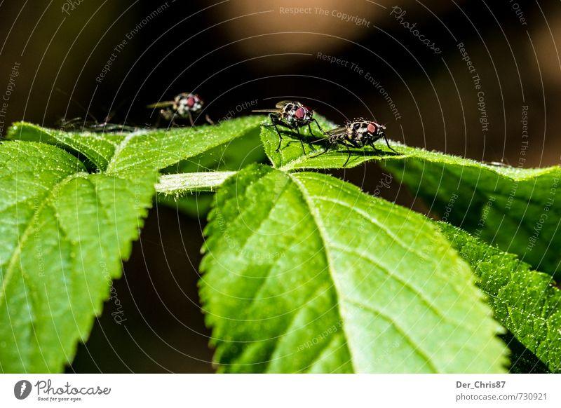 3 Fliegen Natur Pflanze Tier Umwelt klein Fliege warten