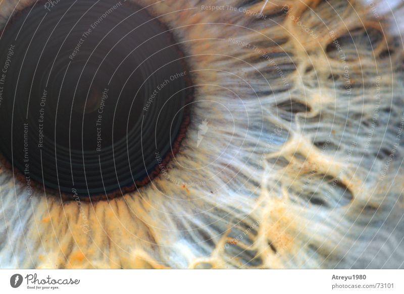 durchblick Pupille glänzend Makroaufnahme Reflexion & Spiegelung Gefäße blind Auge Regenbogenhaut eye atreyu Blick Strukturen & Formen Detailaufnahme Objektiv