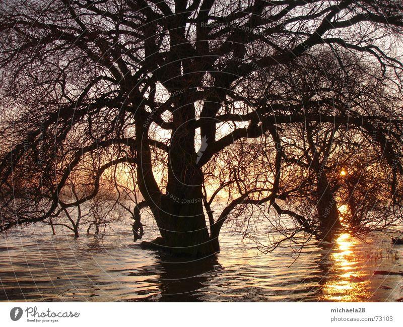 Standhaft gegen den Untergang Natur Wasser Himmel Baum Sonne Meer rot Winter schwarz Leben kalt Herbst Tod Freiheit See Kraft