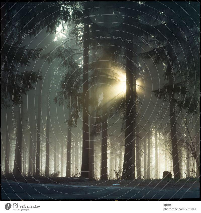 Mehr Licht! Natur Sonnenlicht Nebel Pflanze Baum Wald leuchten dunkel natürlich Optimismus ruhig Neugier Hoffnung Sehnsucht Einsamkeit Beginn Erwartung