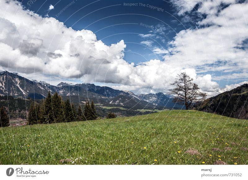 Ennstal Ferien & Urlaub & Reisen Abenteuer Freiheit Sommerurlaub Natur Landschaft Himmel Wolken Gewitterwolken Horizont Frühling Wetter Schönes Wetter Wiese
