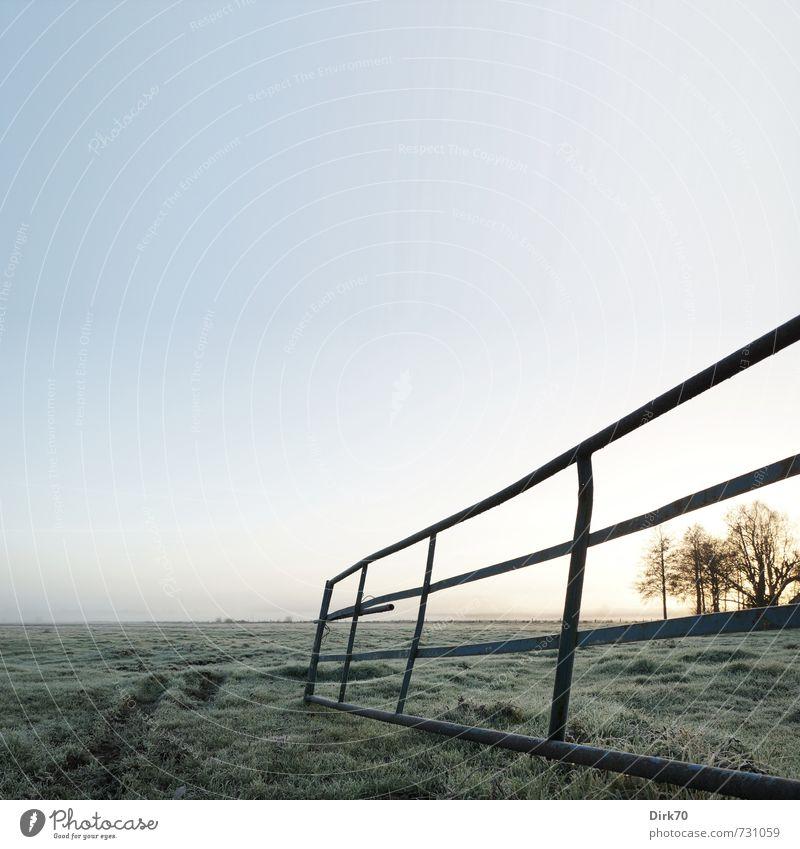 Dezembermorgen Landwirtschaft Forstwirtschaft Viehzucht Viehhaltung Viehweide Wolkenloser Himmel Sonne Sonnenlicht Winter Schönes Wetter Eis Frost Baum Gras