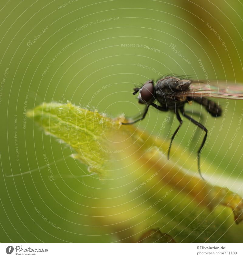 Fliege Umwelt Natur Tier Pflanze Blatt Garten warten klein grün Insekt Farbfoto Außenaufnahme Nahaufnahme Detailaufnahme Makroaufnahme Textfreiraum oben Tag