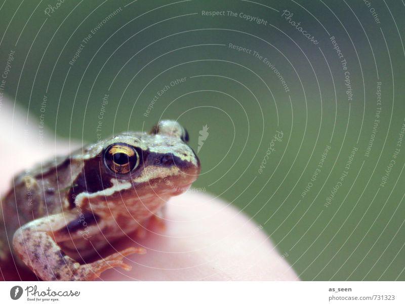 Froschkönig Natur grün nackt Sommer Hand Tier schwarz gelb Umwelt Wiese Frühling braun Garten Wetter glänzend Wildtier