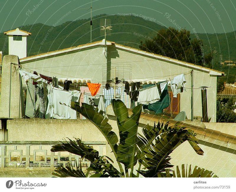 Waschtag Wäsche Wäscheleine Unterhose Männerunterhose Süden mediterran Palme Panorama (Aussicht) Sommer Dienstleistungsgewerbe Freizeit & Hobby oranje orange
