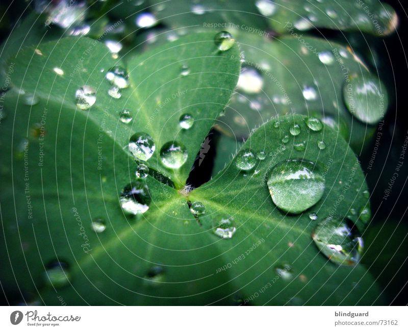 Another Rainy Day Pflanze grün rot Blatt Leben Blüte Glück Garten Regen träumen frisch Wassertropfen nass Kugel feucht Klee