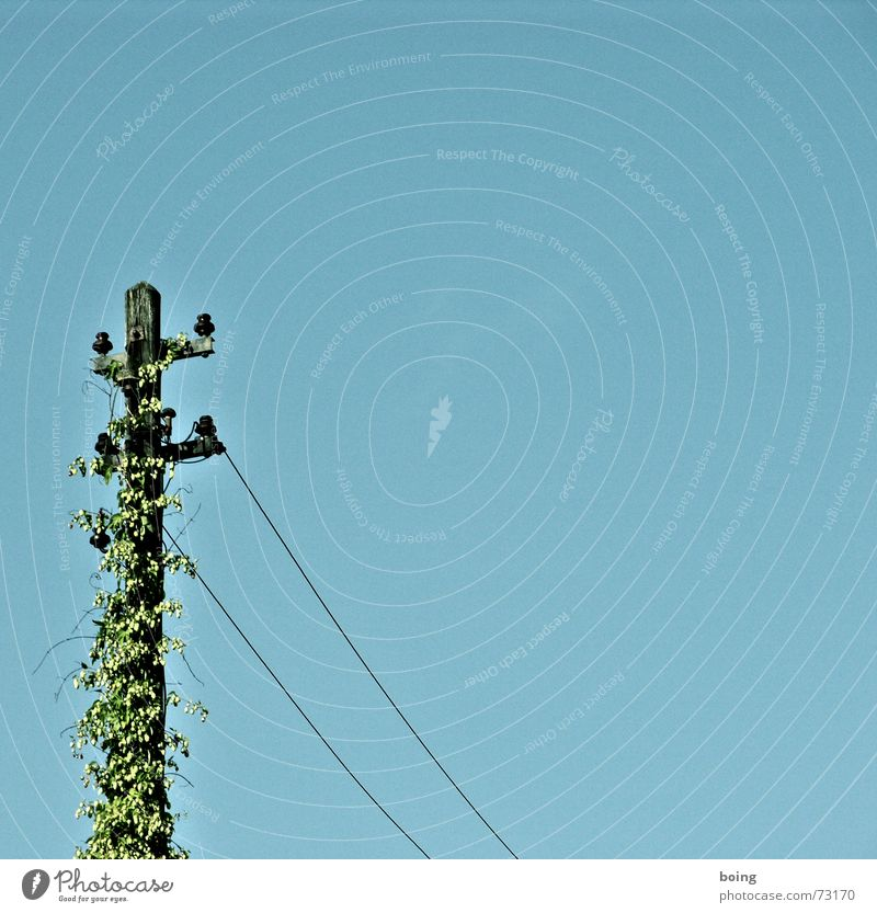 Das Ende vom Strom ist der Anfang vom Bier Elektrizität Hopfen Beginn Strommast Telefonmast Augenbraue Leitung Oberleitung Kraft gefährlich Garten Park entgeld