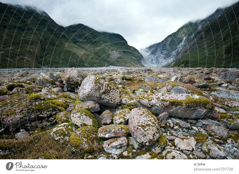 Franz Josef Glacier Valley Umwelt Natur Landschaft Pflanze Urelemente Erde Wasser Himmel Wolken Gewitterwolken Sommer schlechtes Wetter Regen Moos Wildpflanze