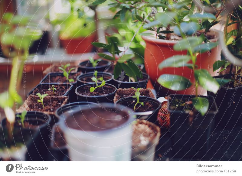 greenhouse effect Gemüse Bioprodukte Pflanze Blatt Grünpflanze Topfpflanze Garten Gewächshaus Wachstum natürlich braun grün Erfolg Leidenschaft geduldig Beginn