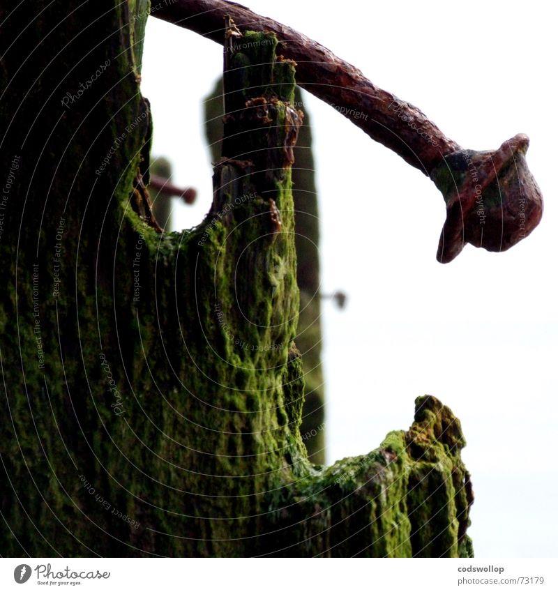rostpilzfeld alt grün Holz braun kaputt verfallen Verfall Rost Nagel Algen Schrott Buhne verwittert unbrauchbar Oxidation Zahn der Zeit