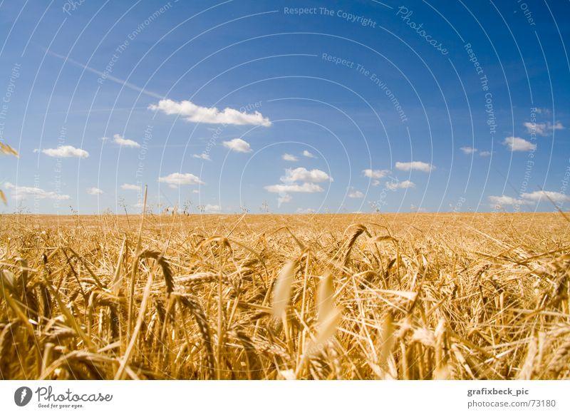 feldidylle Feld ruhig Lebenskraft Ernährung Wolken Sommer Physik Stroh Ähren Erntedankfest Erholung Außenaufnahme Landschaft Lebensmittel Idylle Wärme blau gold