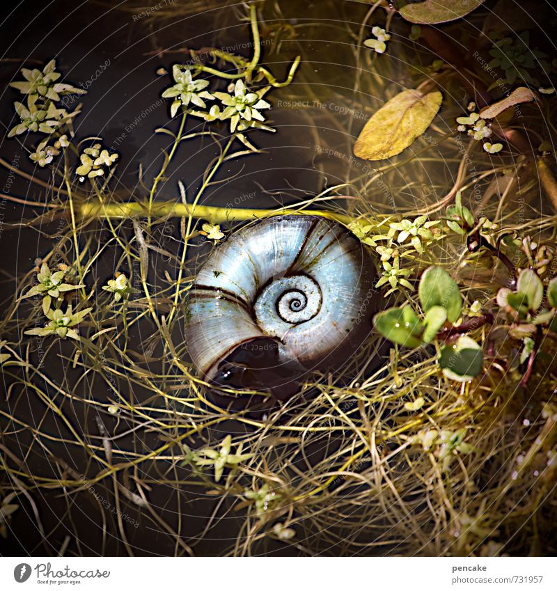 geheimnisvoll | anfang und ende Natur Pflanze Sommer Wasser Tier Gefühle Garten Zeichen Urelemente Unendlichkeit Weltall Teich Wissen Spirale Schnecke