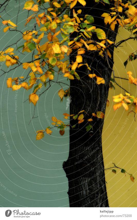 wedding meets pankow alt Baum blau Blatt Haus Einsamkeit gelb Herbst Wand Tod trist Vergänglichkeit Laubbaum