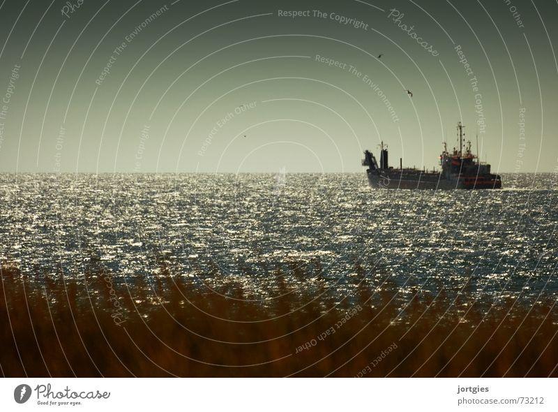 In wichtiger Mission Meer Strand Küste Wasserfahrzeug Nordsee Möwe Erdöl Ölpest