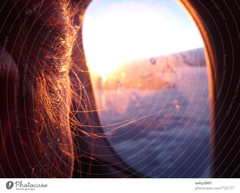 Erleuchtung über den Wolken... feminin Kopf Haare & Frisuren Ohr 1 Mensch Luftverkehr im Flugzeug Flugzeugausblick beobachten Denken Erholung fliegen leuchten