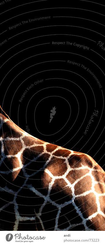 Mosaik Tier Rücken Fell Zoo Fleck Giraffe