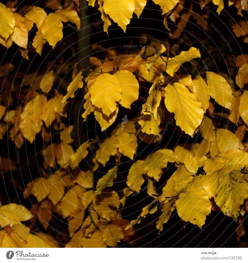 goldener herbst Umwelt Natur Landschaft Pflanze Baum Sträucher Wildpflanze Garten Park Wald gelb Jahreszeiten Herbst Herbstwald Blatt Laubwald herbstlich