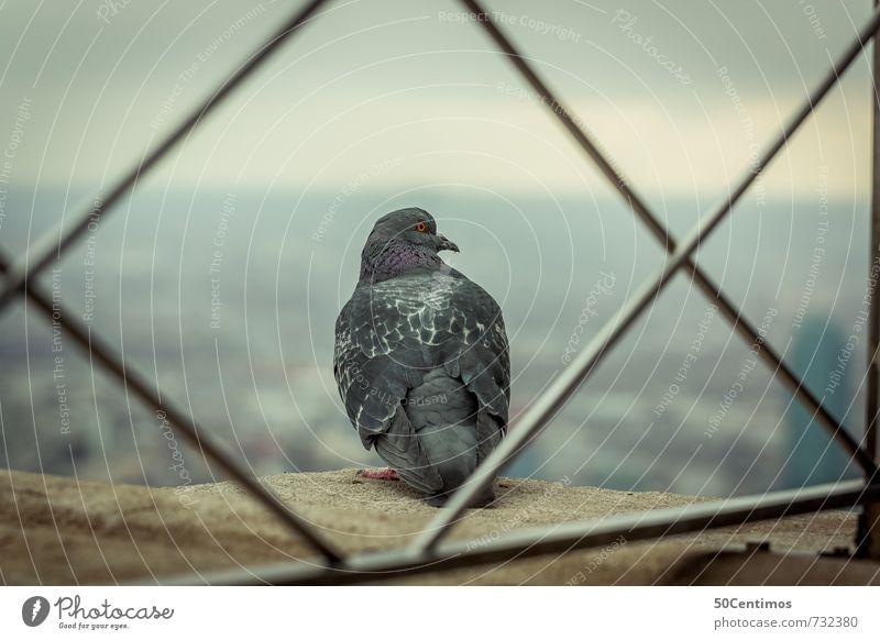 Einsame Taube über der Stadt Natur Einsamkeit Haus Tier kalt Horizont Nebel Hochhaus Wachstum Wildtier Klima Aussicht Abenteuer Pause Skyline