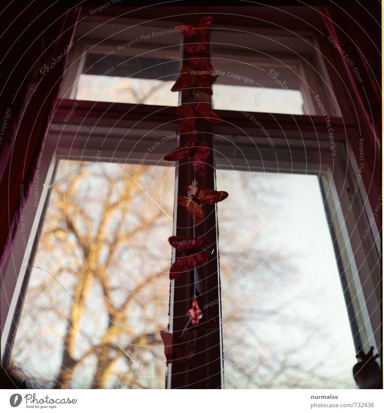 Schmetterlinge Kunst Umwelt Fenster entdecken Erholung glänzend hängen ästhetisch Fröhlichkeit gold rot Gefühle Stimmung Surrealismus Symmetrie träumen