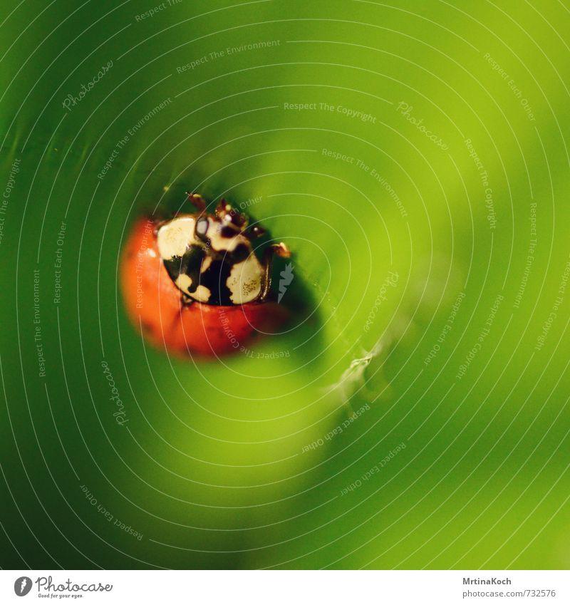 glücksbringer. Natur Frühling Sommer Pflanze Gras Sträucher Grünpflanze Garten Park Wiese Wald Tier Wildtier Käfer Tiergesicht Flügel 1 Fröhlichkeit Glück