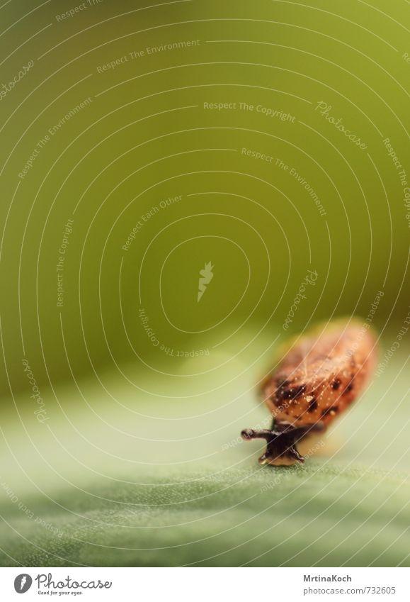 schnägg. Tier Nutztier Schnecke Tiergesicht Fährte 1 sportlich authentisch hell schleimig Schneckenhaus Fühler Auge Weichtier Blatt Farbfoto mehrfarbig