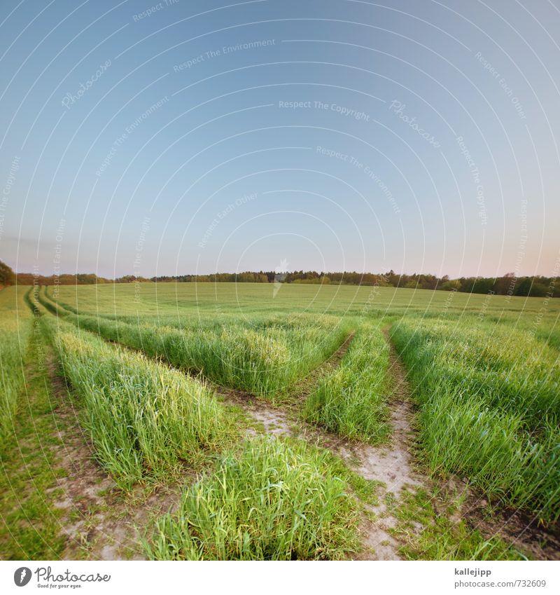 grüne wahl Lifestyle Freizeit & Hobby Umwelt Natur Landschaft Pflanze Tier Schönes Wetter Nutzpflanze Wiese Feld Leben nachhaltig Ackerbau Getreide Wachstum
