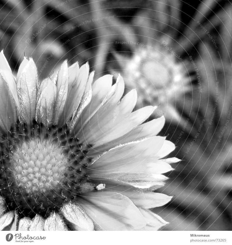 Grünzeug in schwarzweiss Schwarzweißfoto Blume Pflanze Grünpflanze Wiese Garten Blumenstrauß Sommer Natur Blüte Staubfäden Pollen