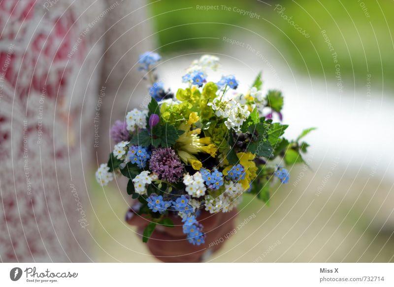 Glückwunsch Valentinstag Muttertag Hochzeit Geburtstag Mensch Kind Junge Frau Jugendliche 1 Blume Blüte Blühend Duft niedlich mehrfarbig Gefühle Stimmung