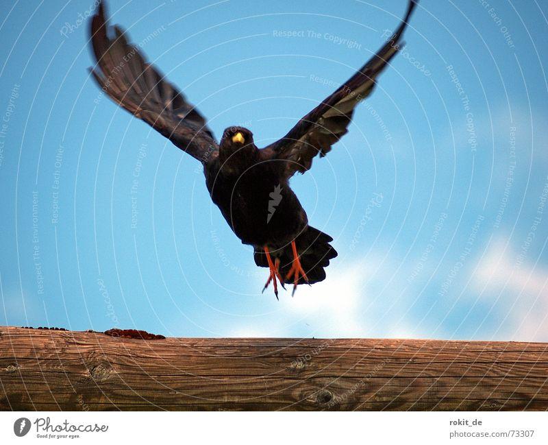 Fly Robin fly, up, up to the sky Himmel rot Ferien & Urlaub & Reisen schwarz Wolken gelb Berge u. Gebirge Freiheit Holz Fuß Luft Vogel Wind Beginn Luftverkehr Dach