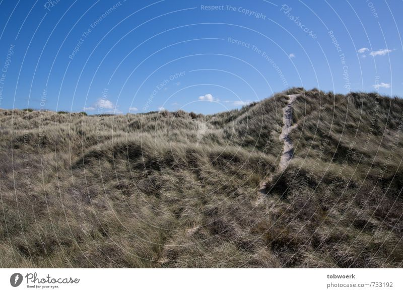 Dünenweg Landschaft Sand Himmel Schönes Wetter Gras Küste Strand Nordsee Wüste natürlich ruhig Natur Ferien & Urlaub & Reisen Zufriedenheit Dünengras Stranddüne
