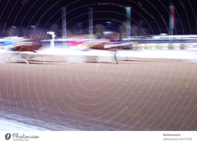 Turf1 Sport Pferd Rennbahn Reiter