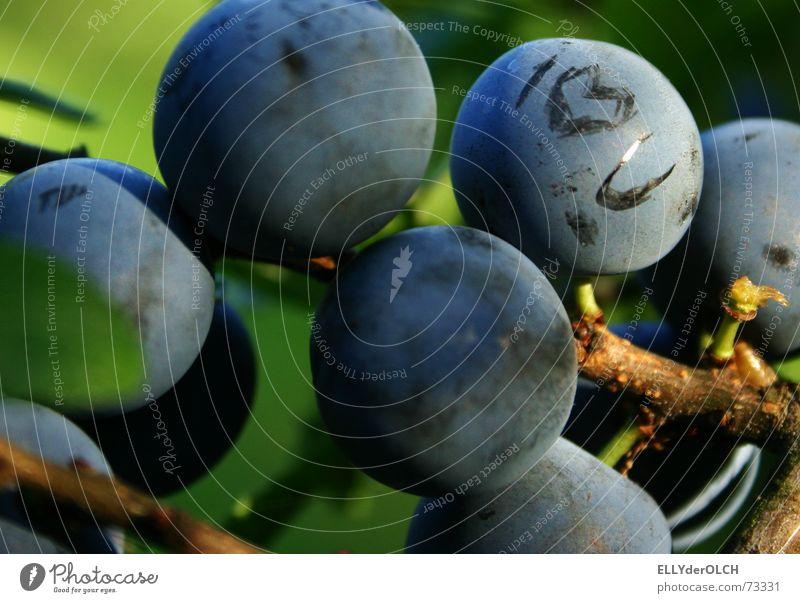 Love U Natur blau Sommer Herbst Gesundheit Frucht Herz Sehnsucht Partnerschaft Vitamin Beeren Liebeserklärung Schwarzdorn