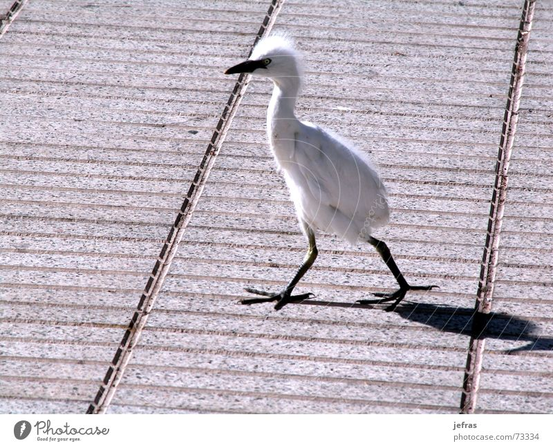 taking a walk Natur Tier animals birds walking isolated funny