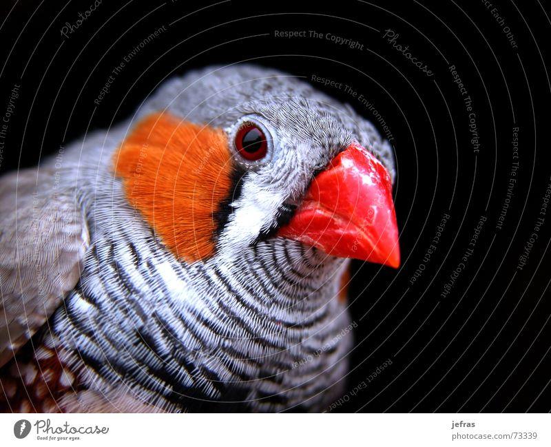 my bird Nahaufnahme Tier Makroaufnahme Natur animal Detailaufnahme feathers