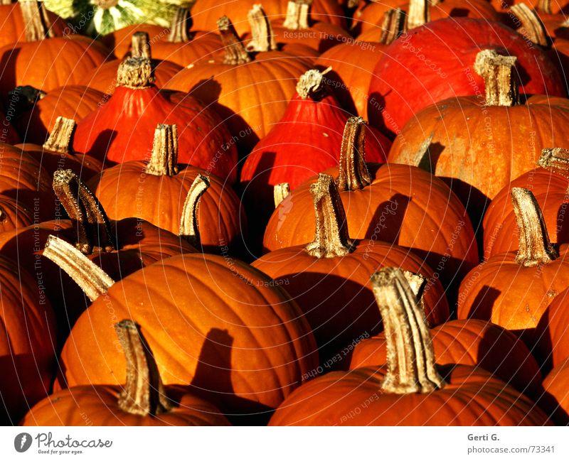 wolle Rose kaufe? Natur Farbe gelb Herbst Feste & Feiern orange Lebensmittel Ernährung Dekoration & Verzierung Küche Lebewesen Gemüse Stengel Ernte lecker