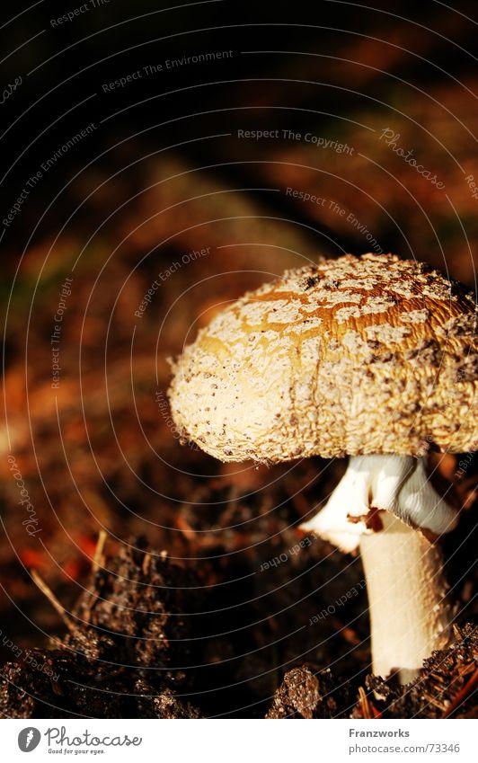 ...auf einem Bein Blatt Herbst Erde Suche Stengel Pilz Fleck Waldboden Baseballmütze