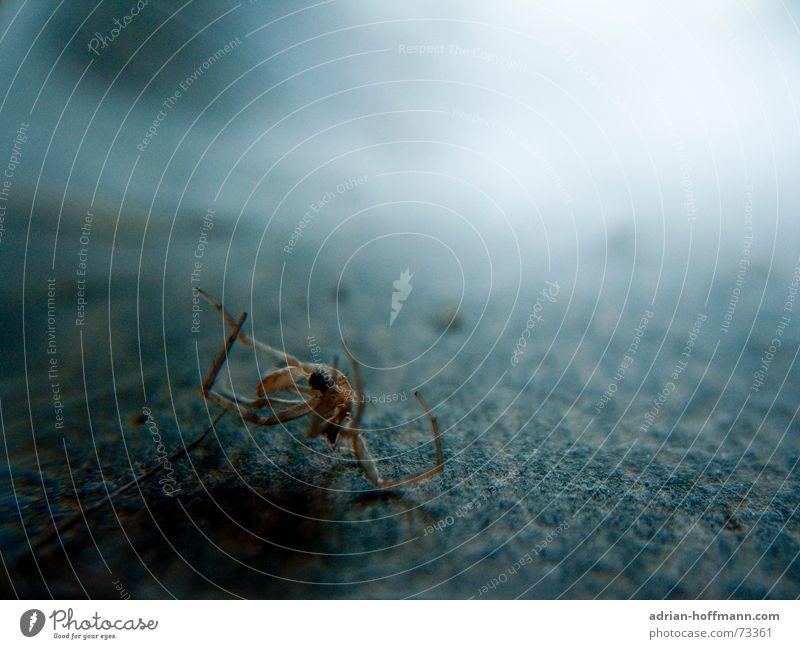 Leblose Hülle Spinne kaputt Insekt Staub dunkel Unschärfe Ekel Tod dreckig Bodenbelag Makroaufnahme Schatten