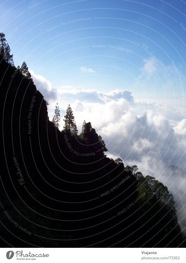 Spannender Abstieg Teneriffa Kanaren Spanien Europa Teide Puerto de la Cruz Vulcano Bergwanderung Natur steil Wolken Himmel Baum Tanne tenerife canary islands