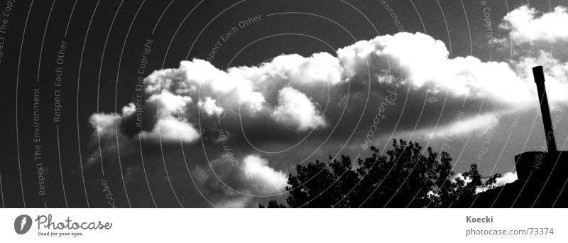Himmel und Ähd Schwarzweißfoto Umwelt Natur Luft Wolken Sonne Sonnenlicht Sommer Wetter Schönes Wetter Pflanze Baum Blatt Grünpflanze Stadtrand Altstadt