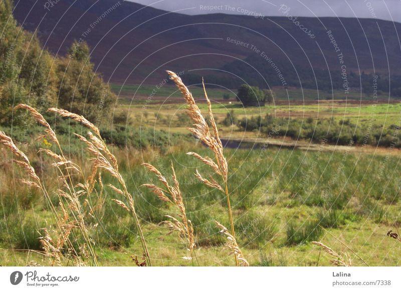 Scot_Aehren Ferne Herbst Landschaft Wind Ähren Schottland