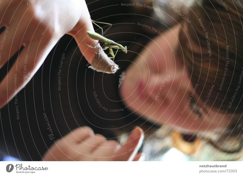 Pass auf, kleiner! Frau Hand Tier Finger Insekt Heftpflaster Ausgrenzung Zeigefinger Heuschrecke Gottesanbeterin