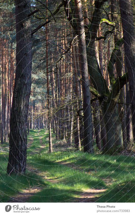 Waldruhe Natur schön Sommer Baum Einsamkeit ruhig dunkel Gefühle Wege & Pfade Frühling Gras braun träumen Wachstum Schönes Wetter Fußweg