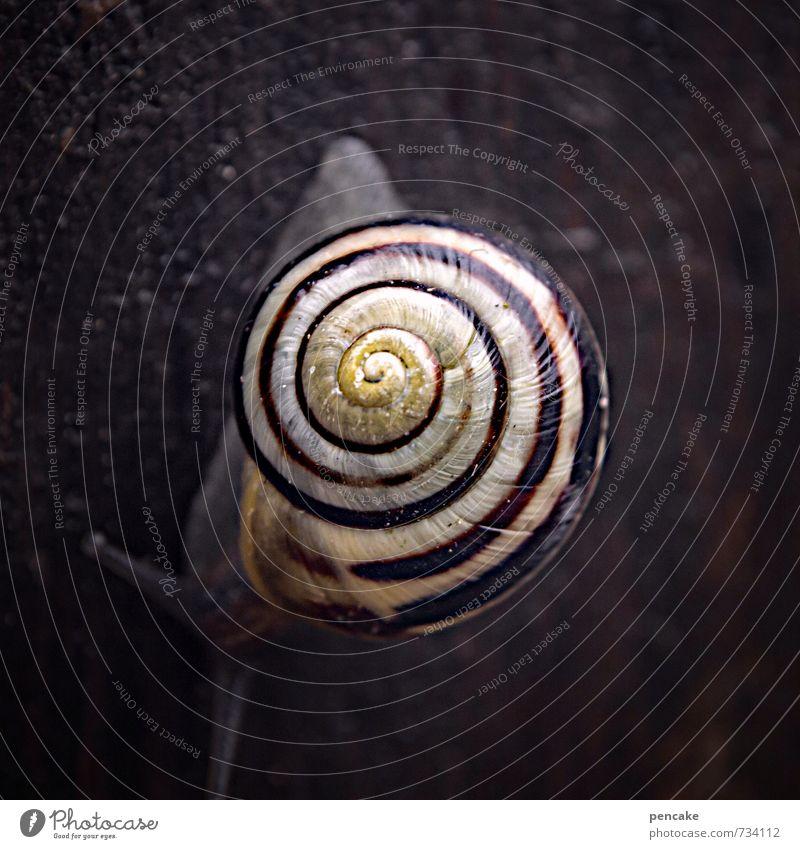 magische spirale Natur Sommer Erholung Tier dunkel feminin Frühling Holz Garten authentisch nass Urelemente Unendlichkeit Zeichen Weltall Mitte