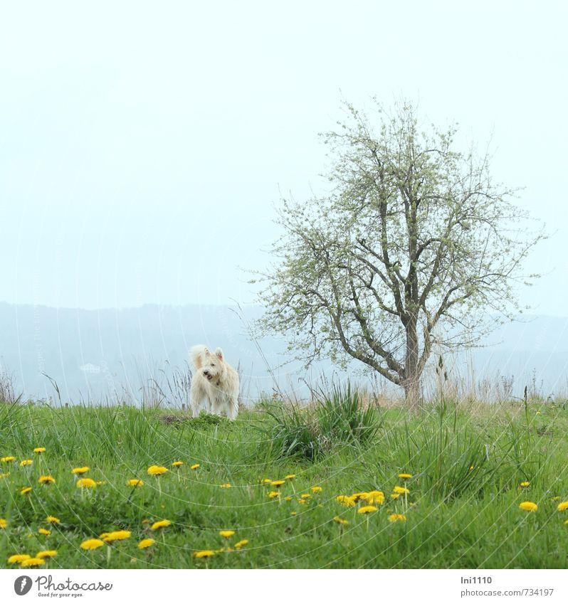 AST 7 | Bailey, komm doch ! Hund Himmel Natur blau grün weiß Pflanze Blume Landschaft Freude Tier gelb Wiese Frühling Gras Blüte