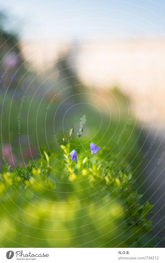 Spaziergang Natur grün Pflanze Sommer Erholung Blume Frühling Garten Park Zufriedenheit Sträucher Schönes Wetter beobachten Blühend Lebensfreude violett