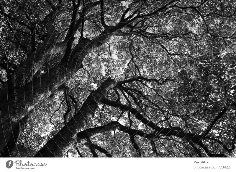 Albtraum Baum Angst Surrealismus Gefäße unheimlich Alptraum organisch