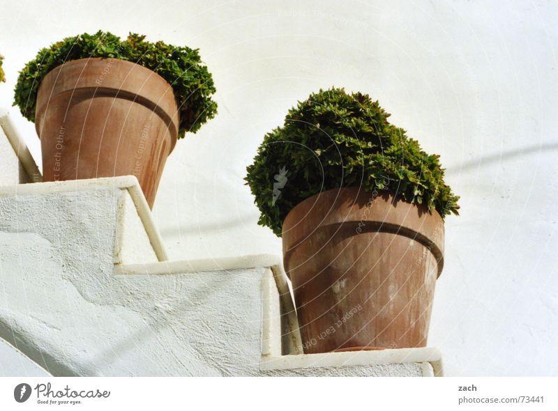 Was reimt sich auf Kräutertopf? Abstufung weiß Blume Topf Kräuter & Gewürze Griechenland Santorin diagonal Ernährung Pflanze Terrakotta Petersilie Küche