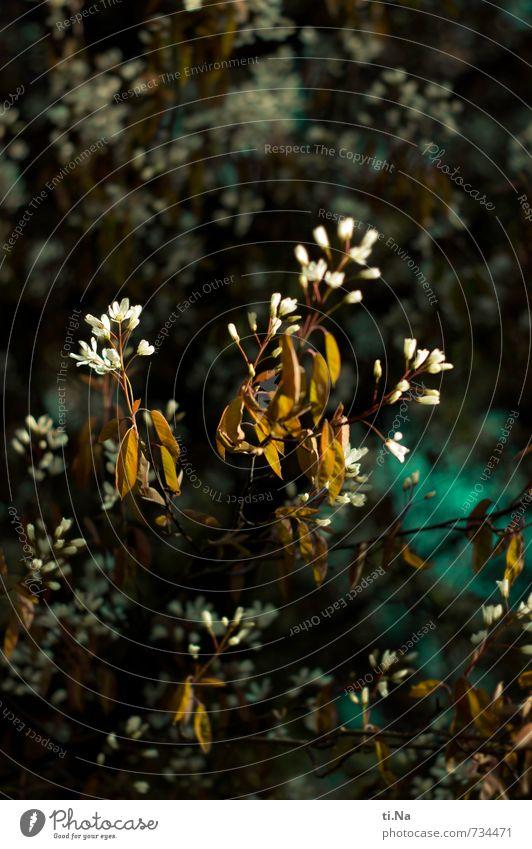 die Geschichte geht weiter (= Pflanze schön Blume Freude Frühling Glück Zufriedenheit Wachstum authentisch Sträucher Fröhlichkeit Blühend Lebensfreude